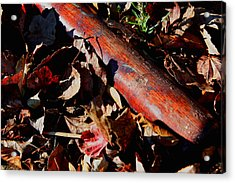 Forgotten Summer Acrylic Print by Christopher McPhail