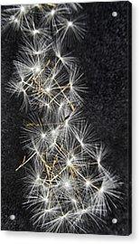 Forgotten Wishes Acrylic Print