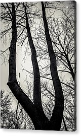 Forked Acrylic Print by Off The Beaten Path Photography - Andrew Alexander