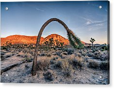 Form Acrylic Print by Peter Tellone