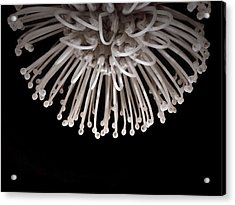 Acrylic Print featuring the photograph Formation by Susan Maxwell Schmidt