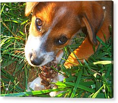 Forrest And His Pinecone Acrylic Print by Andrew Martin