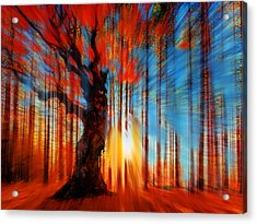 Forrest And Light Acrylic Print by Tony Rubino