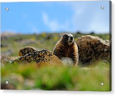 Fort Marmot Acrylic Print