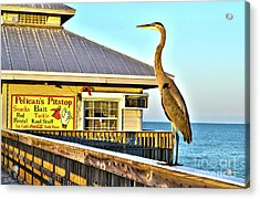 Acrylic Print featuring the photograph Fort Myers Beach Bird On Pier by Timothy Lowry