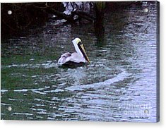 Acrylic Print featuring the photograph Fort Pierce Pelican by Megan Dirsa-DuBois