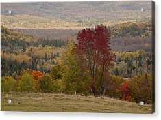 Acrylic Print featuring the photograph Fort Stewart Autumn Landscape by Jim Vance