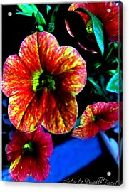 Fortinos Petunias Acrylic Print by Danielle  Parent