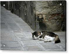 Forty Winks Acrylic Print