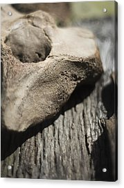 Fossil Bone With Weathered Wood Acrylic Print by Rebecca Sherman