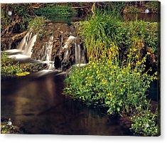 Fossil Creek Acrylic Print by Leland D Howard