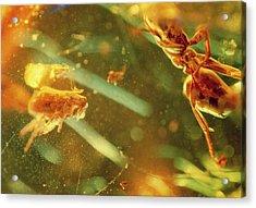 Fossilised Flea In Amber Acrylic Print by K. H. Kjeldsen/science Photo Library