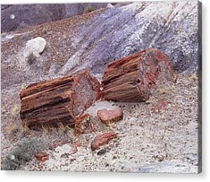 Fossilised Trees In Petrified Forest National Park Acrylic Print