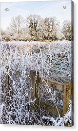 Acrylic Print featuring the photograph Fosty Scene by David Isaacson