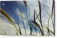 Acrylic Print featuring the photograph Fountain Grass by Richard Stephen