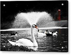 Fountain Swan Acrylic Print by Shane Holsclaw