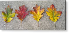 Four Autumn Leaves Acrylic Print