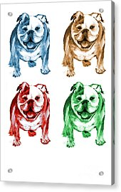 Four Bulldogs Acrylic Print by Barbara Marcus