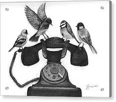 Four Calling Birds Acrylic Print