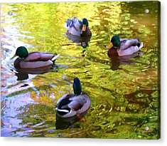 Four Ducks On Pond Acrylic Print by Amy Vangsgard