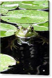 Four Eyed Frog Acrylic Print by Darryl  Kravitz