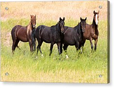 Four Friends Acrylic Print by Vinnie Oakes