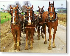Four Horse Power Acrylic Print by B Wayne Mullins