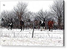 Four Horses Acrylic Print by Karen McKenzie McAdoo