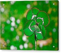 Four Leaf Clover Acrylic Print