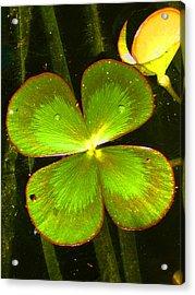 Four Leafed Clover Acrylic Print