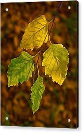 Four Leaves In Light Acrylic Print by Viktor Savchenko