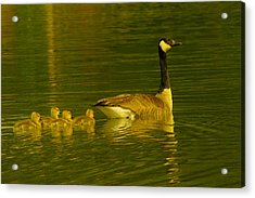 Four Little Miracles Acrylic Print by Jeff Swan
