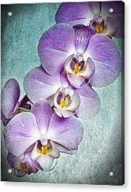 Four Little Orchids Acrylic Print