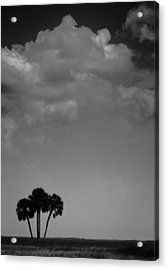 Acrylic Print featuring the photograph Four Palms by Bradley R Youngberg