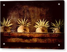 Four Potted Plants Acrylic Print