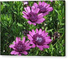 Four Purple Flowers Acrylic Print