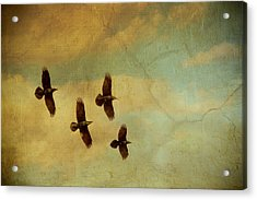 Acrylic Print featuring the photograph Four Ravens Flying by Peggy Collins
