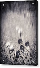 Four Red Tulips And Two Yellow Ones Acrylic Print by Silvia Ganora