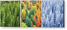 Four Season Forest Acrylic Print by Borchee