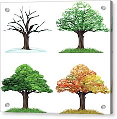 Four Season Tree Acrylic Print by Sceka