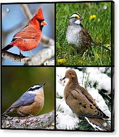 Four Seasons Birds Square Acrylic Print by Christina Rollo