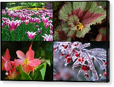 Four Seasons Of Flowers Acrylic Print