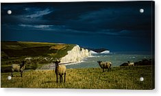 Four Sheep And Seven Sisters Acrylic Print by Chris Lord