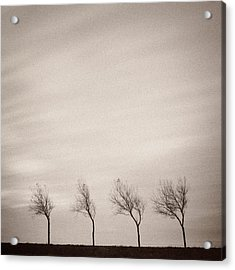 Four Trees Acrylic Print by Dave Bowman