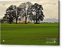 Acrylic Print featuring the photograph Four Trees by Tonia Noelle