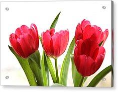 Four Tulips Acrylic Print by Menachem Ganon