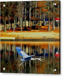 Fowl In Flight Acrylic Print