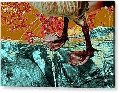Fowl Weather Friend Acrylic Print