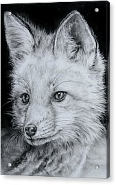 Fox Kit Acrylic Print by Jean Cormier