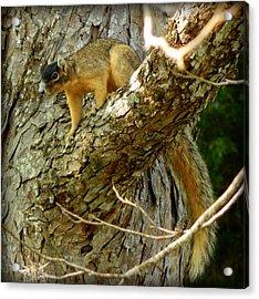 Fox Squirrel IIi Acrylic Print by Lynn Griffin